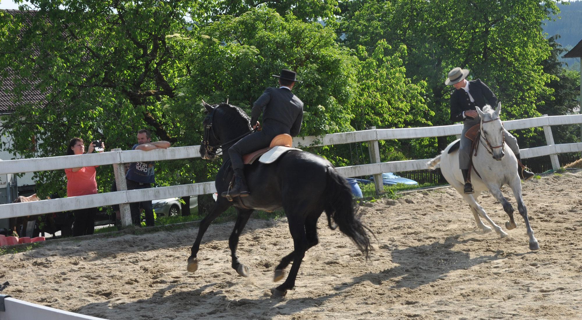 pferdefest_0521