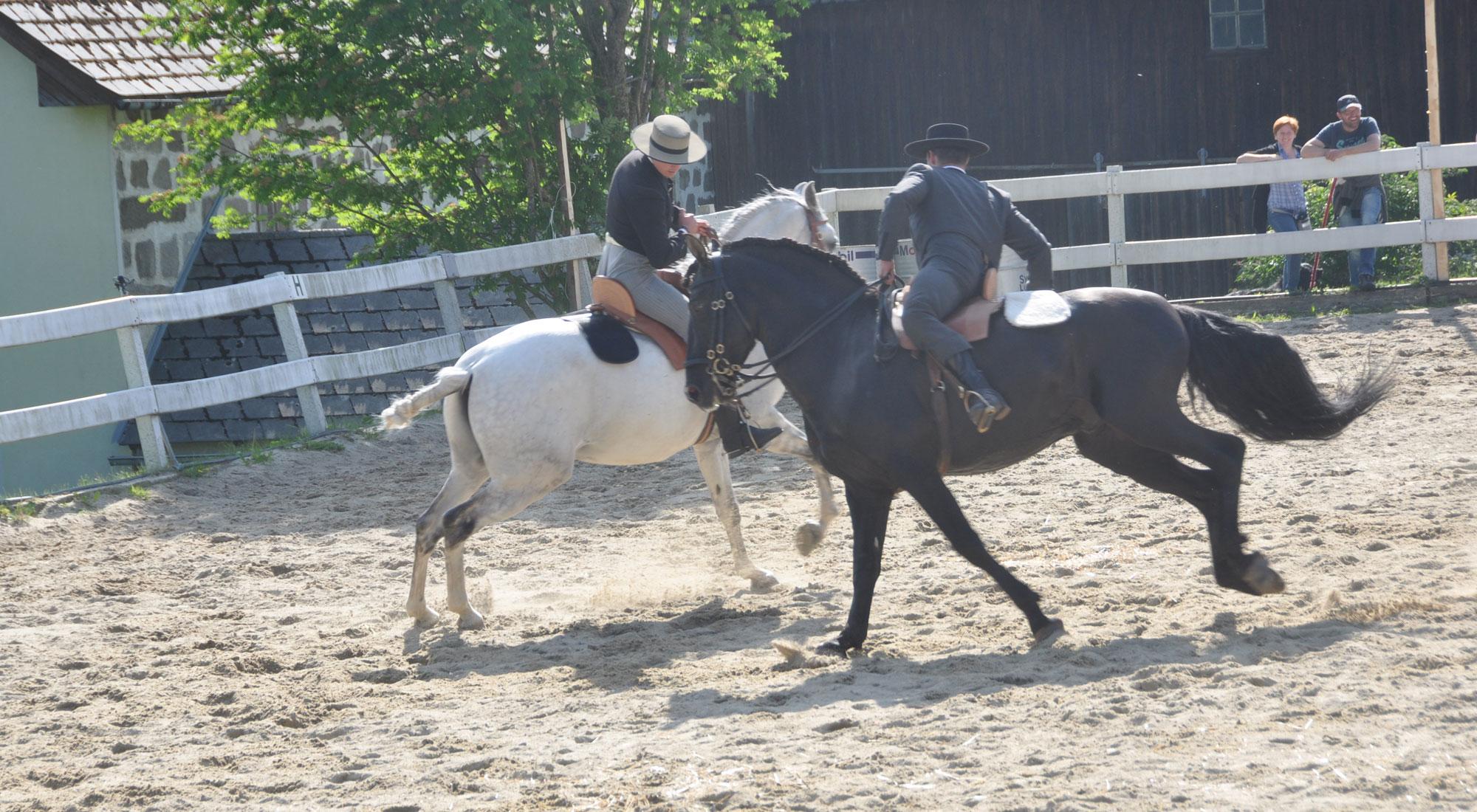 pferdefest_0545