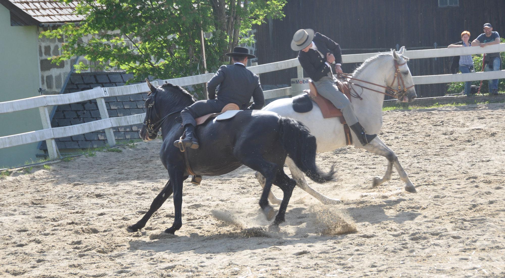 pferdefest_0547